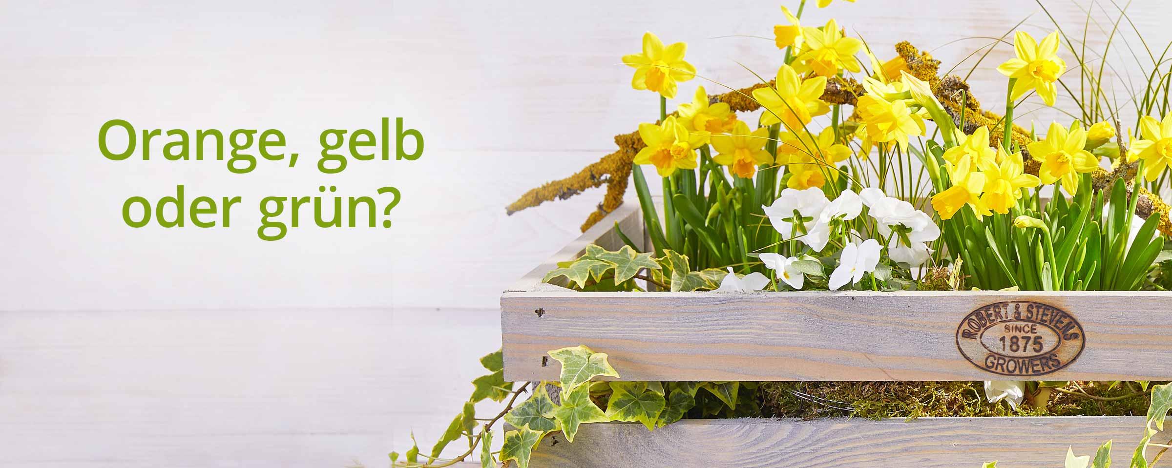 Ungewöhnlich Www Dehner De Gartenmöbel Zeitgenössisch - Die besten ...
