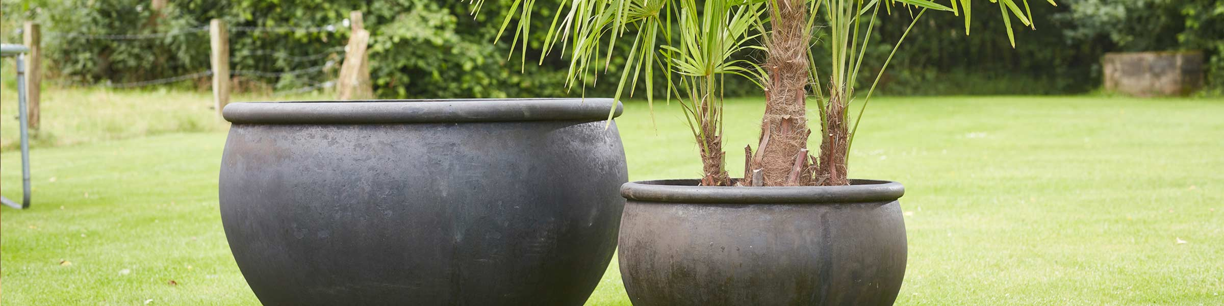 pflanzt pfe bei dehner kaufen top auswahl online dehner. Black Bedroom Furniture Sets. Home Design Ideas
