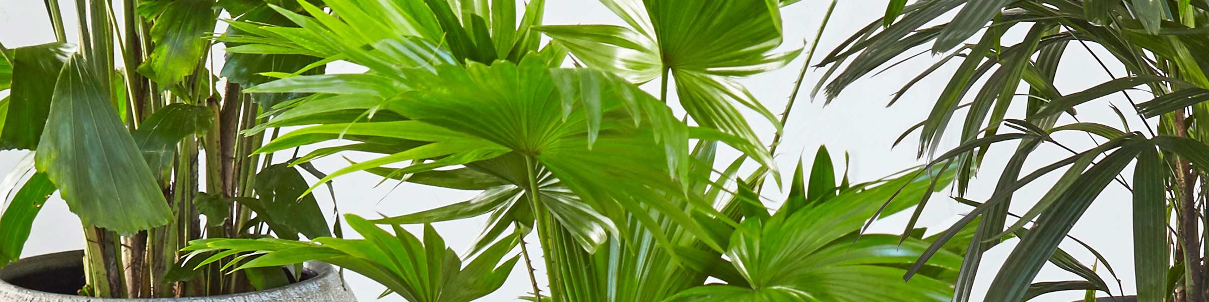 Mit Grünpflanzen eine grüne Oase schaffen | Dehner