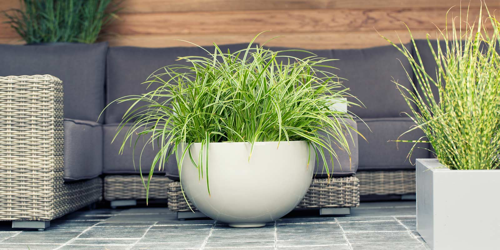 tolle tipps f r ihre pflanzen dehner. Black Bedroom Furniture Sets. Home Design Ideas
