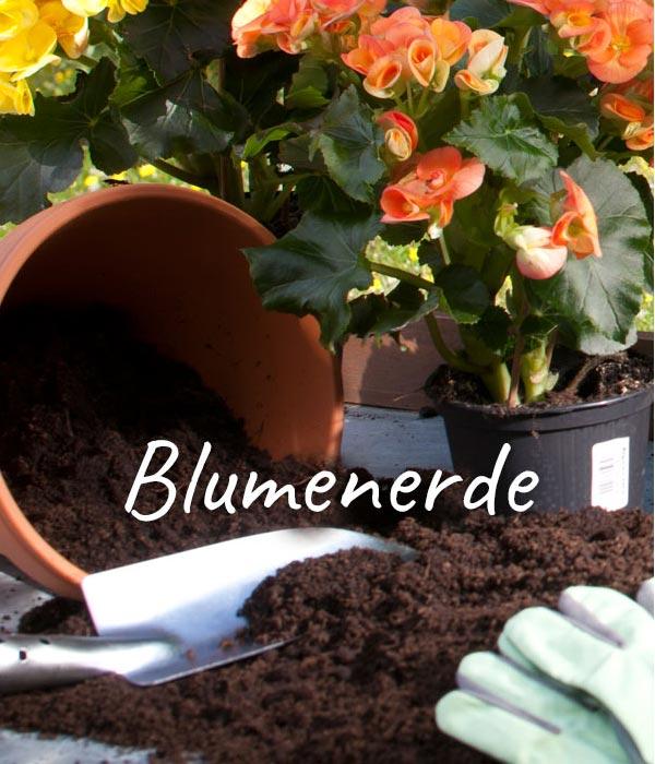terrassenpflanzen f r ein blumenparadies dehner. Black Bedroom Furniture Sets. Home Design Ideas
