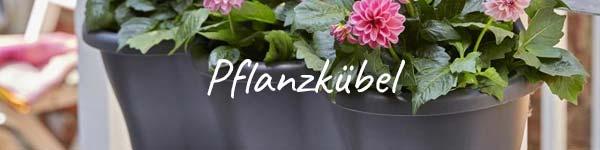 dehner ihr online shop f r garten pflanzen balkon tiere. Black Bedroom Furniture Sets. Home Design Ideas