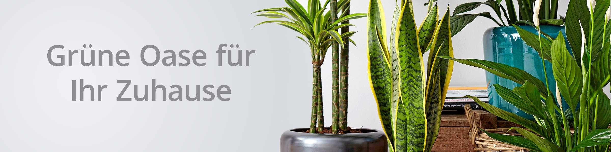 Unsere Pflanzen Kategorien