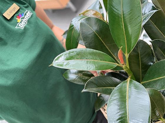 Teamleiter Garten & Haus Verkäufer Verkäuferin Dehner Garten-Center Zimmerpflanzen