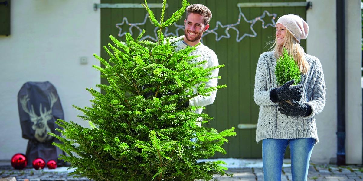 Dehner Christbaumkugeln.Dehner Weihnachtsbaum Italiaansinschoonhoven