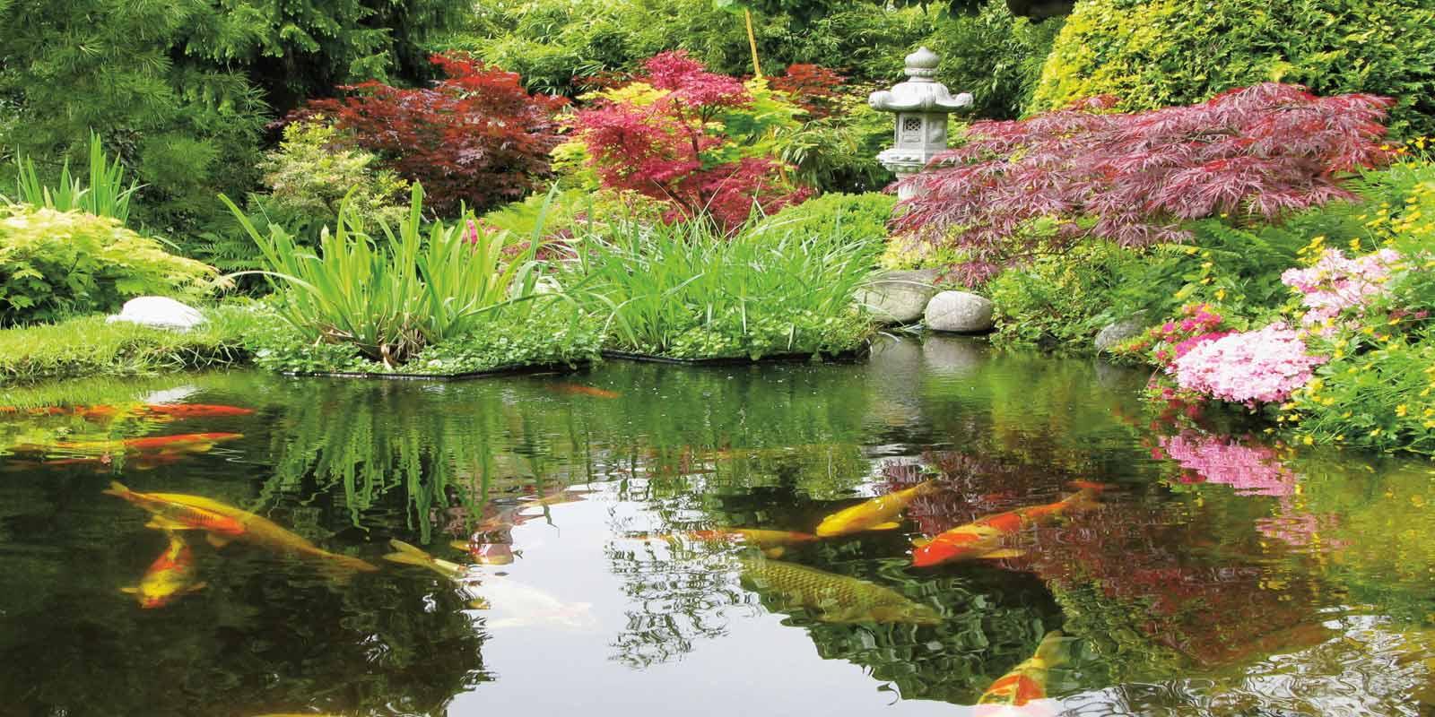 Dehner Ihr Online Shop Für Garten Pflanzen Balkon Tiere