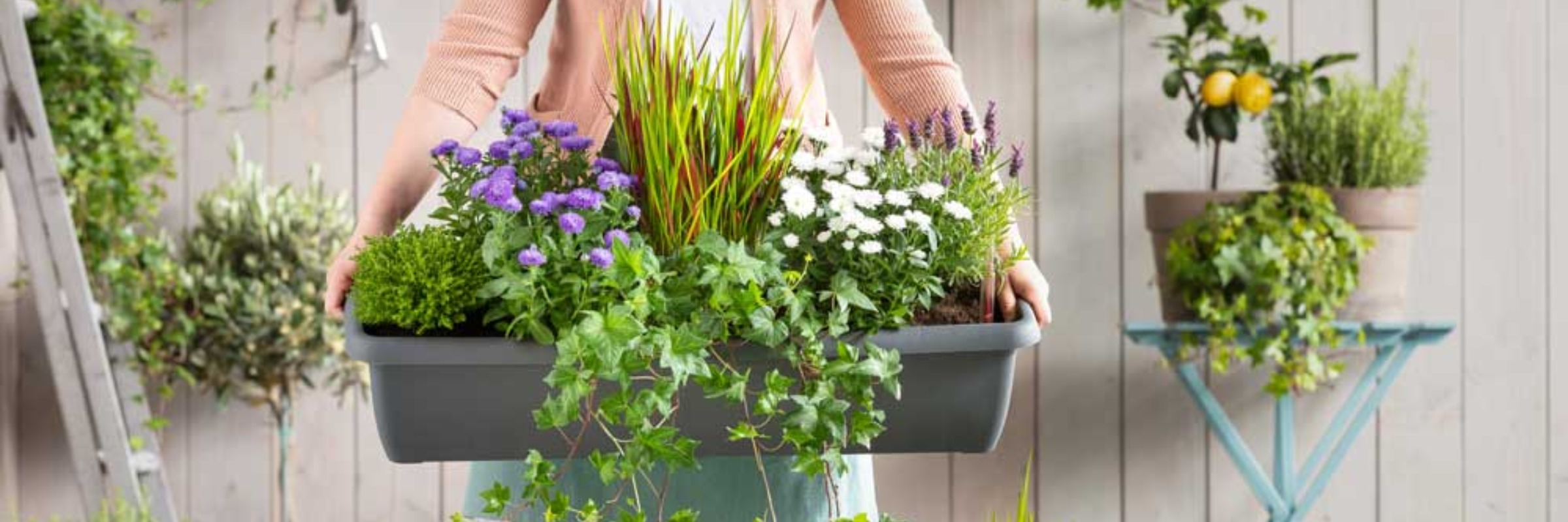 Für den balkon winterpflanzen Winterpflanzen für