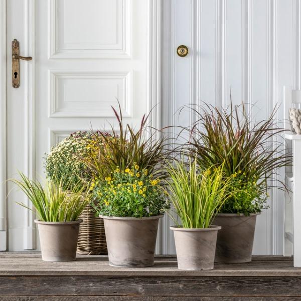 Ziergräser für einen schönen Garten   Dehner