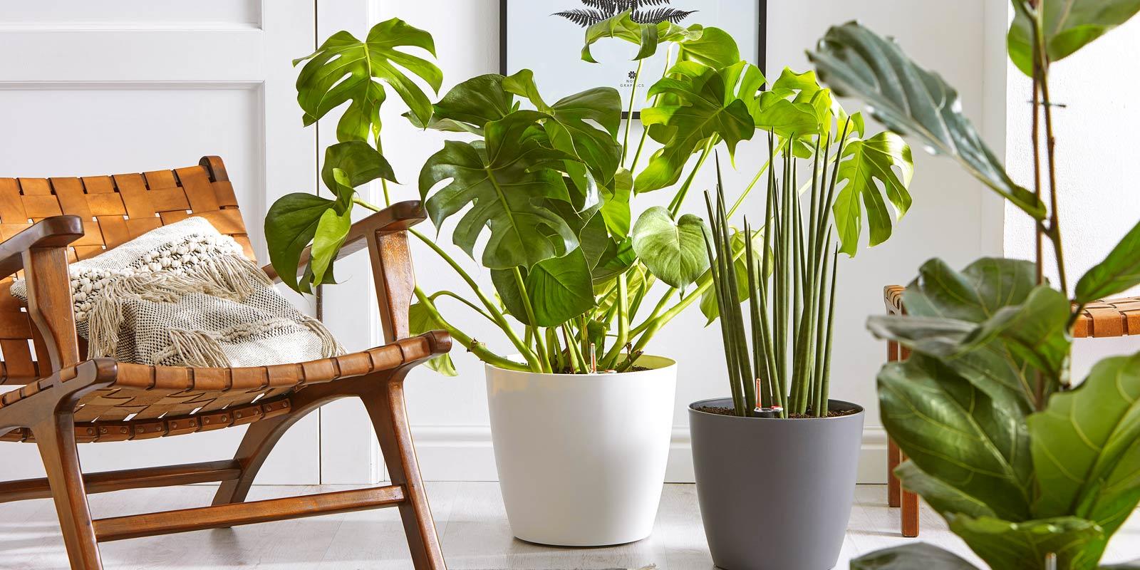 Pflanzen in XXL! | Dehner