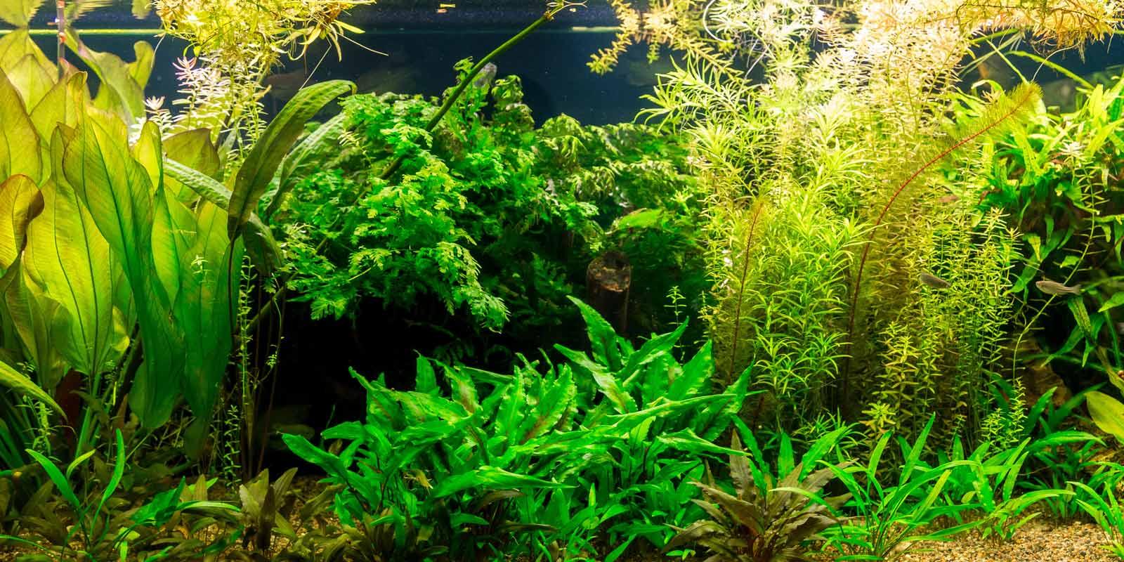 60 L Mit Led-leuchte Ca Sinnvoll Aquarium