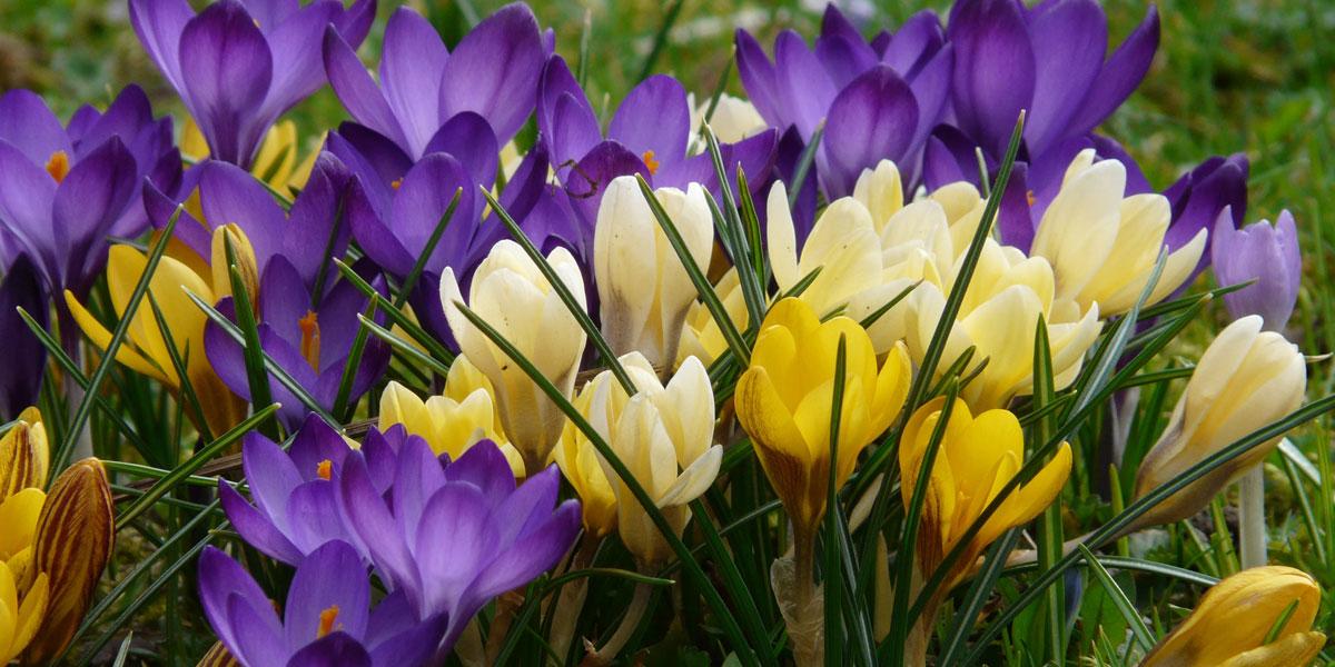 Das Gartenjahr Im Februar Dehner