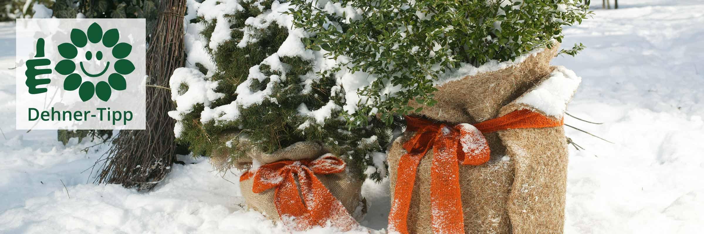 Dehner Ihr Online Shop Fur Garten Pflanzen Balkon Tiere