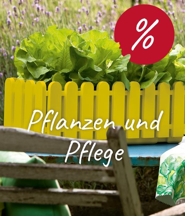 Lieblich Angebote Pflanzen