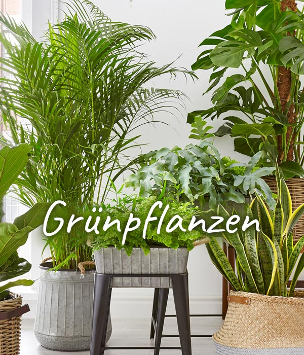 Prachtvolle Pflanzen online bestellen   Dehner