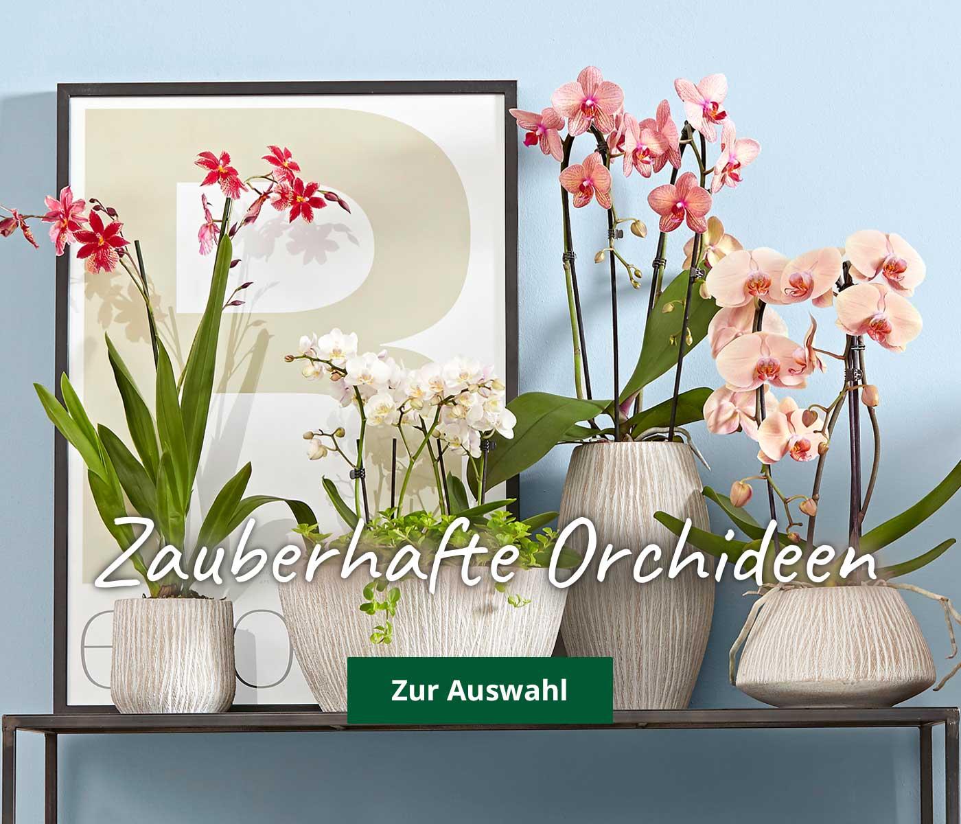 Orchideentopf Fur Ihre Bluhfreunde Bei Dehner Bestellen Dehner