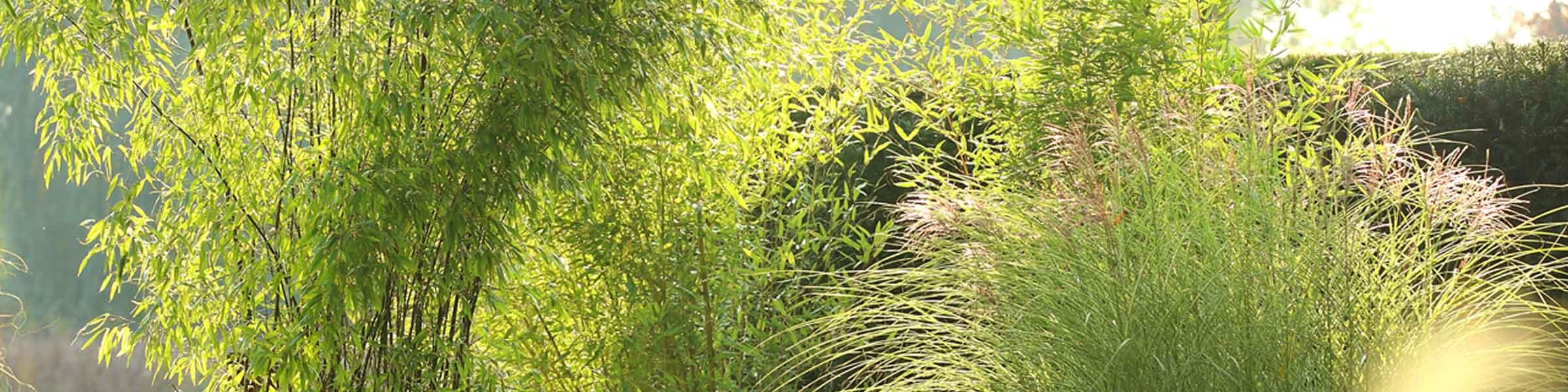 Trend Bambus und Gräser | Dehner