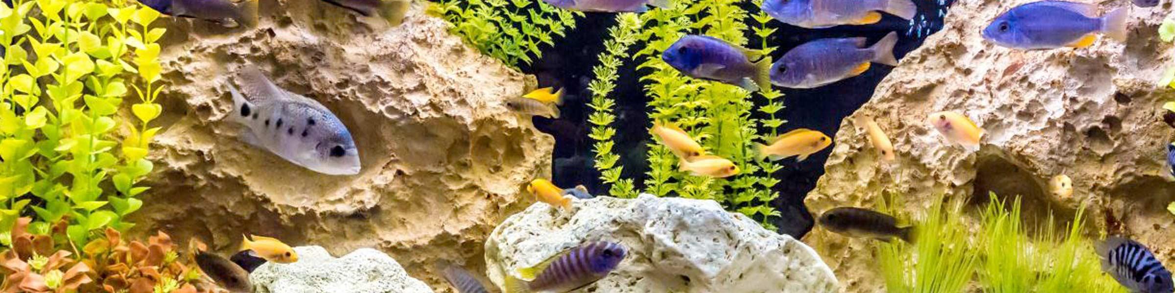 Aquarium Deko Mit Vielfaltigen Moglichkeiten Dehner