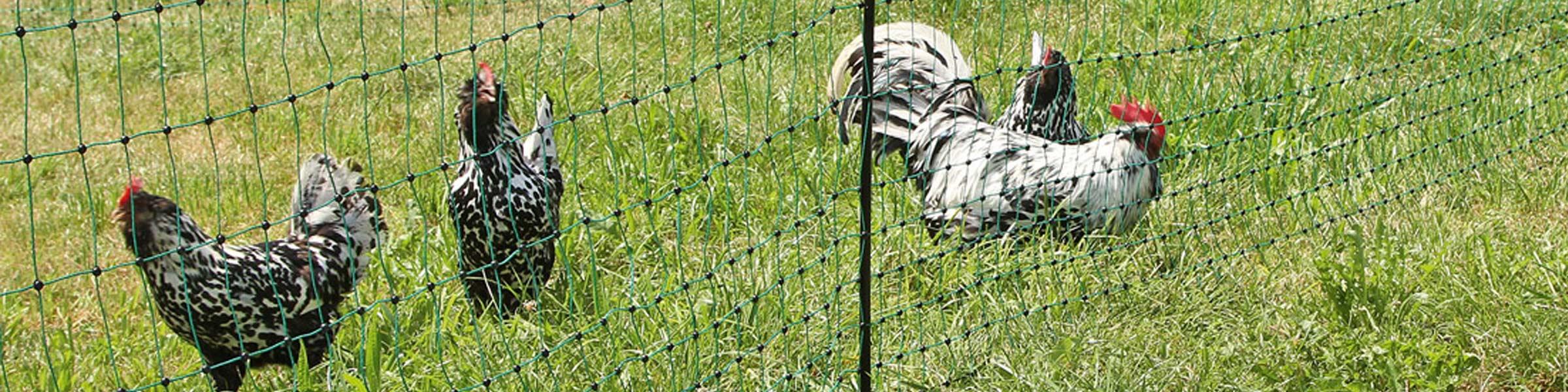 Der Huhnerstall Fur Ihren Garten Jetzt Online Kaufen Dehner