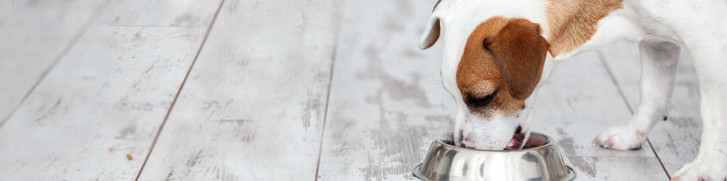 hundefutter online bestellen nat rlich in top qualit t dehner. Black Bedroom Furniture Sets. Home Design Ideas