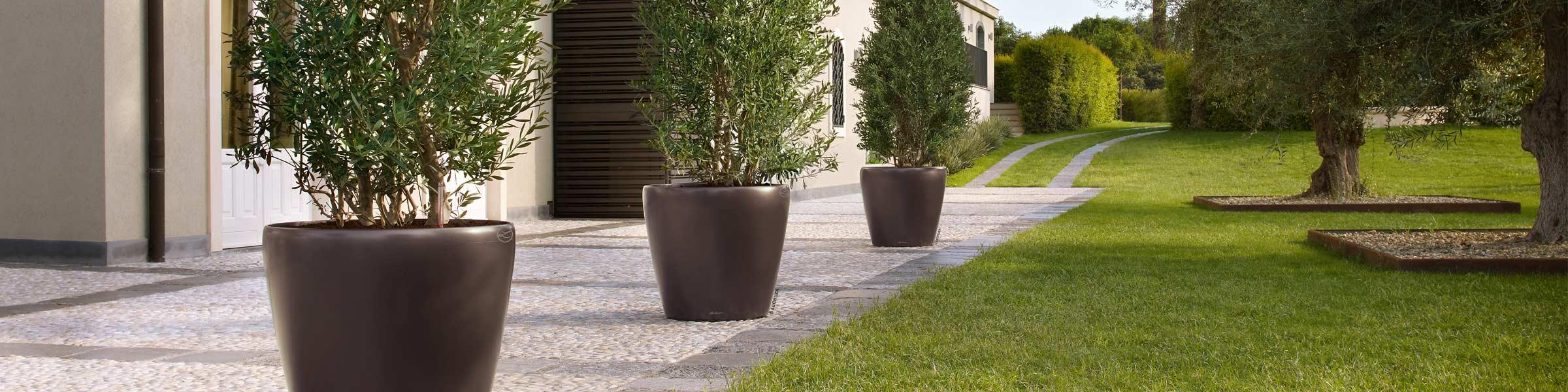 Terrassenpflanzen