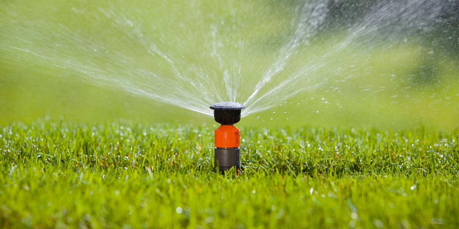 Tipps Fur Die Richtige Bewasserung Dehner