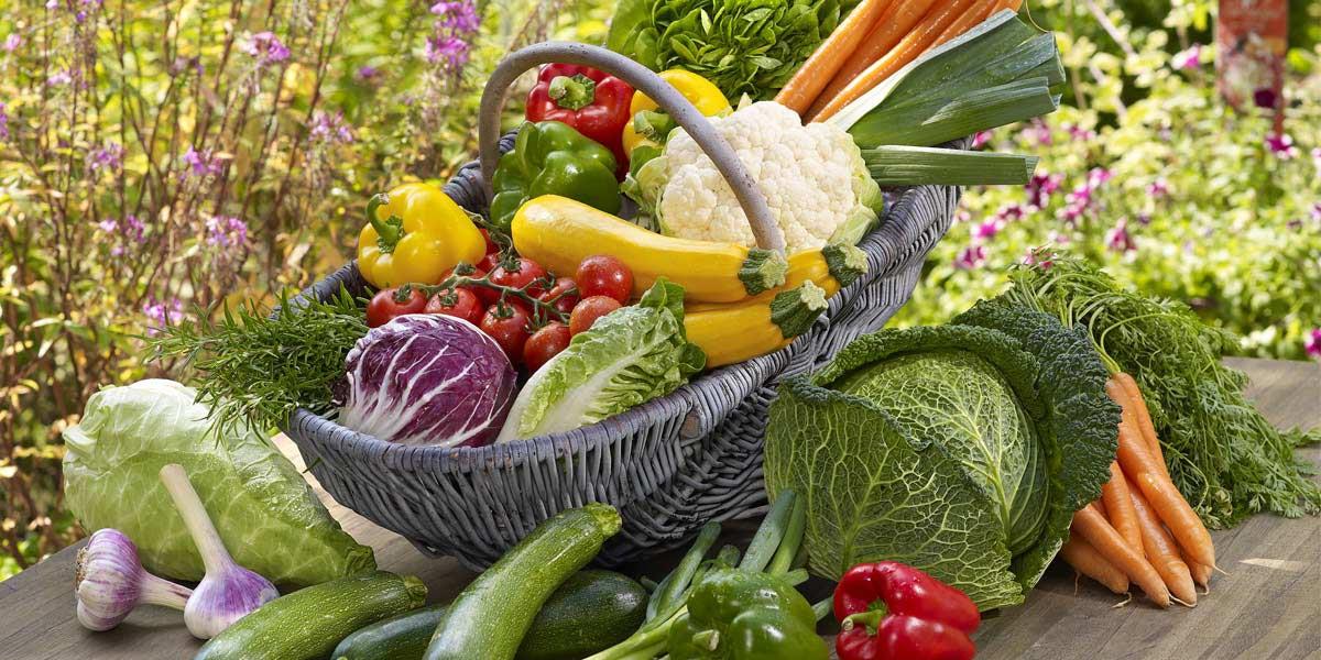 Berühmt Tipps fürs perfekte Gemüse | Dehner #UT_38