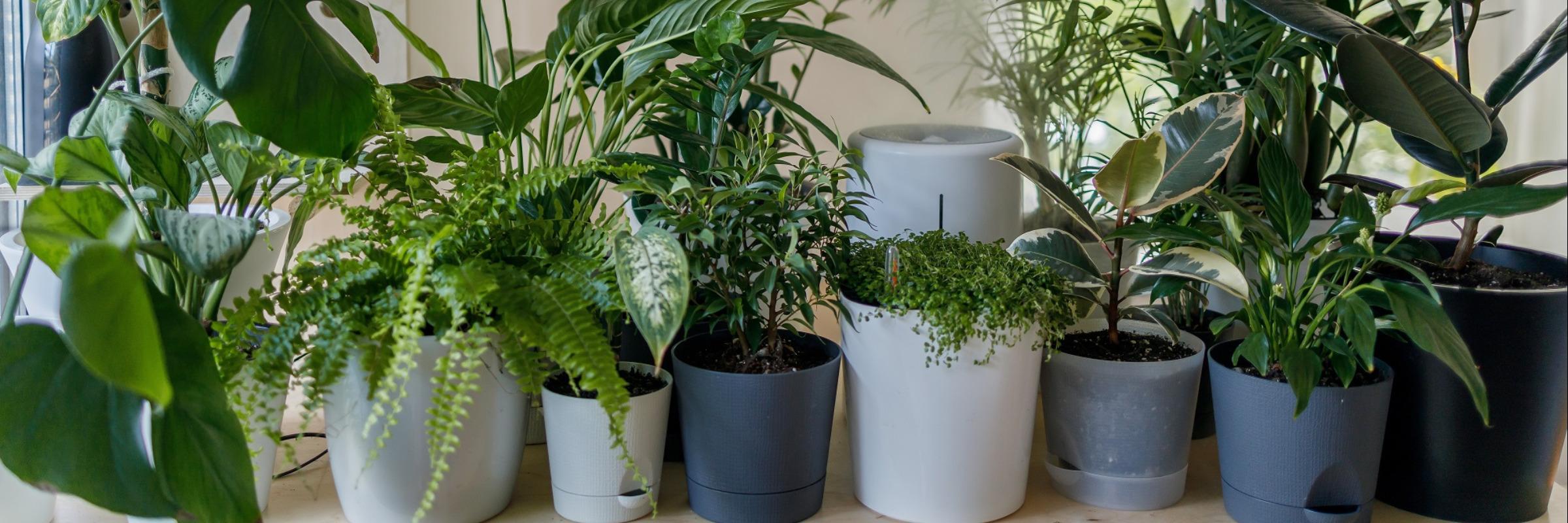 Top 16: Zimmerpflanzen für wenig Licht